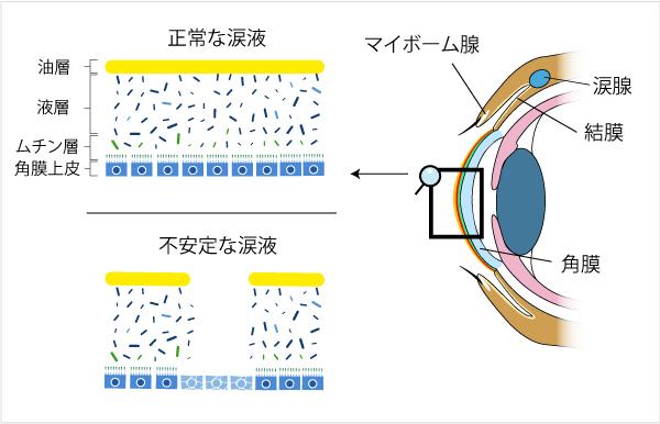 目と涙液層の構造