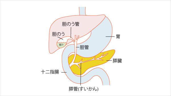 胆道感染症(胆のう炎・胆管炎) (たんどうかんせんしょう) | 社会福祉 ...