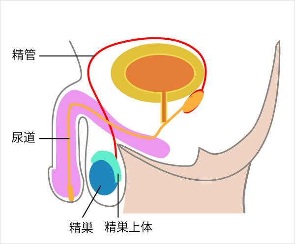 痛い 睾丸
