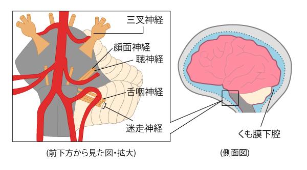 読み方 三叉 神経