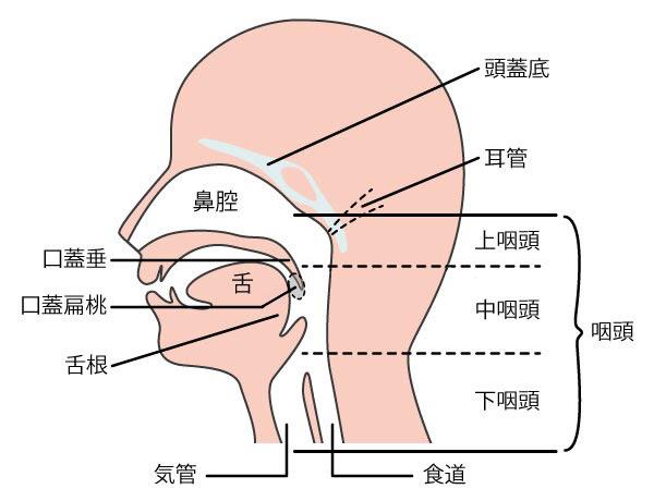 ん 症状 が 咽頭 のどの痛みの症状・原因|くすりと健康の情報局