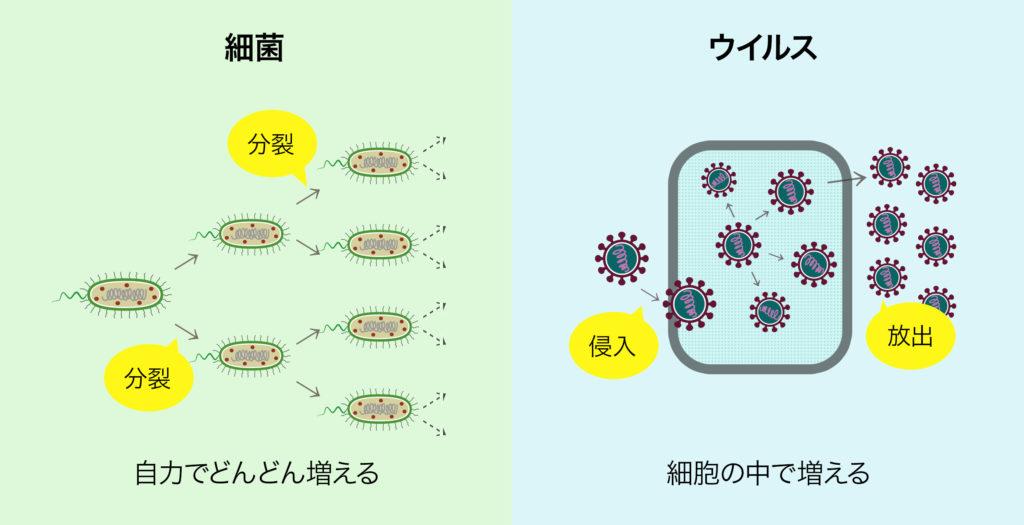 細菌はウイルスと違って細胞を持っています