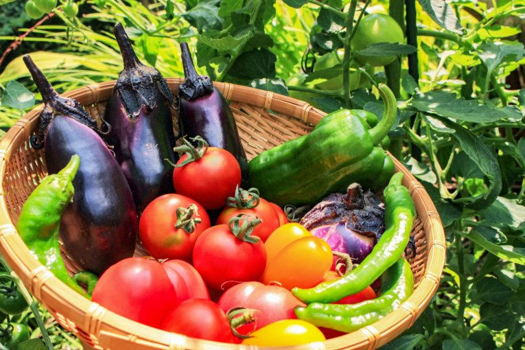 彩り豊かなのも夏野菜の特徴
