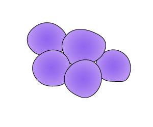 (黄色)ブドウ球菌