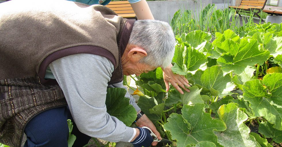 病院や施設で暮らす人の生活を植物で彩る「園芸療法」《ソーシャルインクルージョン・取り組み紹介》