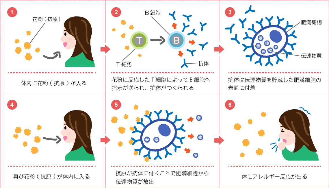舌 花粉 免疫 症 療法 下