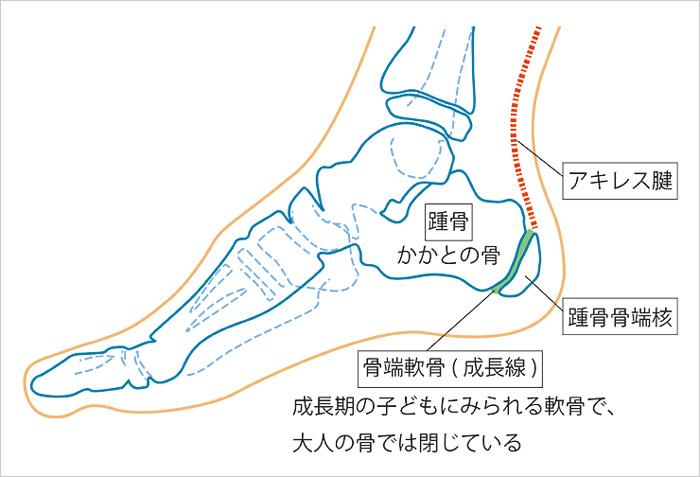 発育期の踵骨の名称