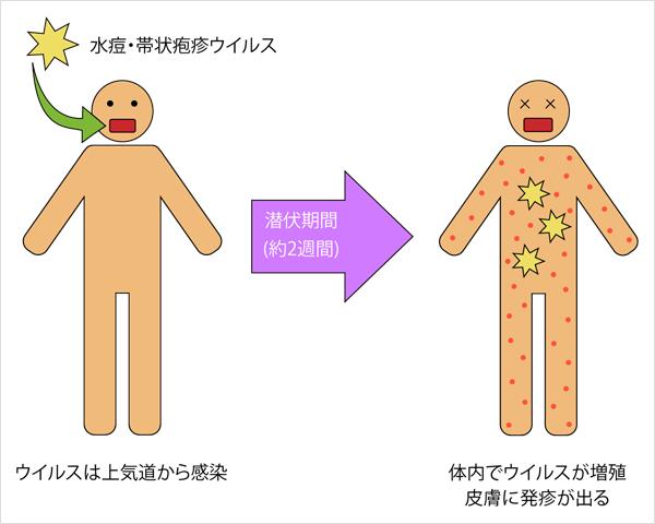 子供 帯状 確率 疱疹 に うつる 帯状疱疹がうつる期間は3週間!症状と治療について