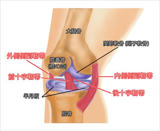 「膝 何関節?」の画像検索結果