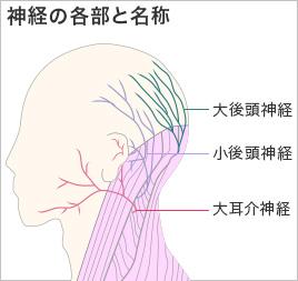 神経の各部と名称