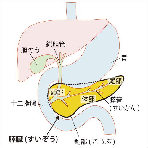 膵臓 癌 背中 の 痛み
