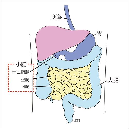 性 リンパ腫 濾胞